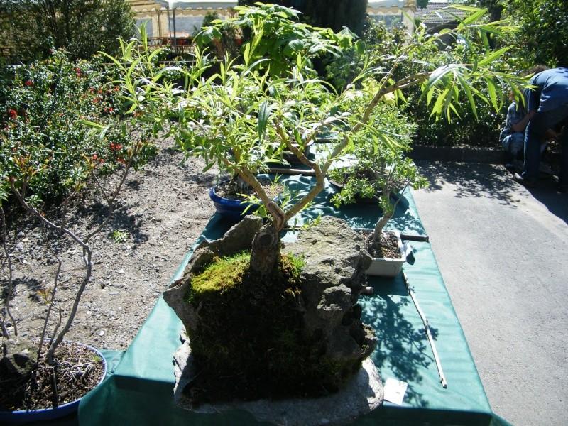 expo bonsai st paul des landes(15) Dscf0938