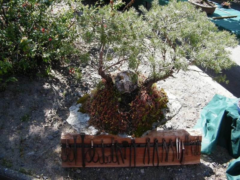 expo bonsai st paul des landes(15) Dscf0939