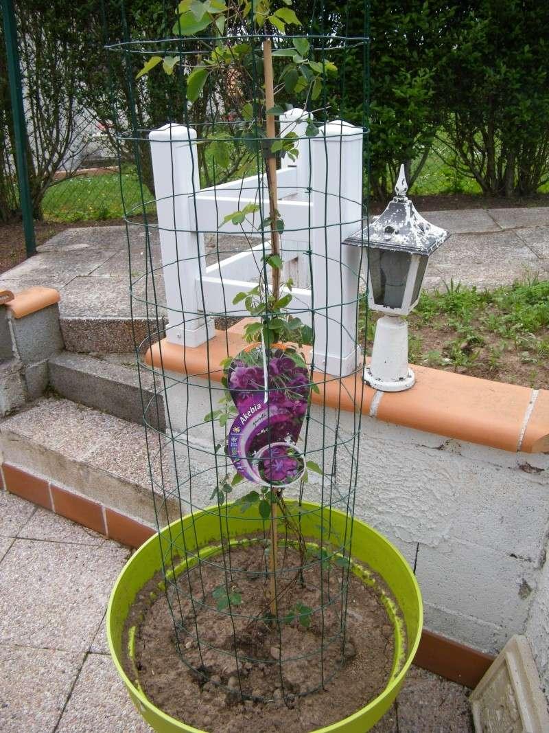 pour faire grimper des plantes Dscf0952