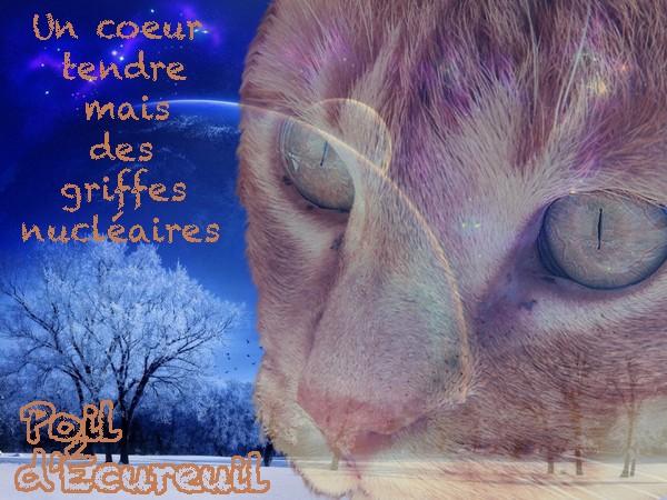 Cadeaux pour Poil d'Écureuil !  Poil_d12