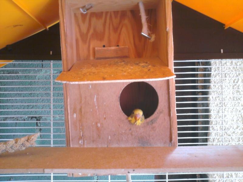 Comment avoir des nids pour 0 euro ??? Photo072