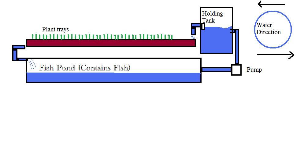 AquaPonics System 101 Aquapo10