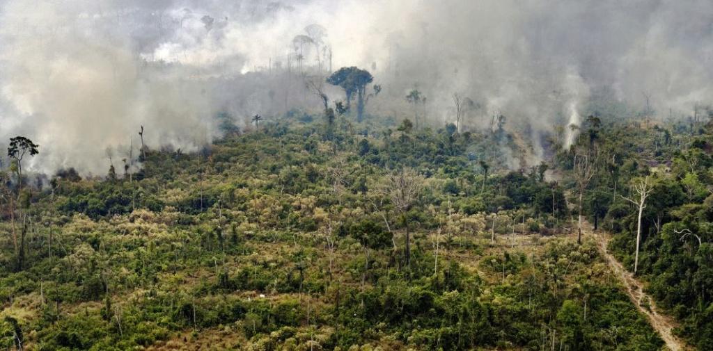 Une plante miracle peut freiner la déforestation de l'Amazonie ! 000_1j10