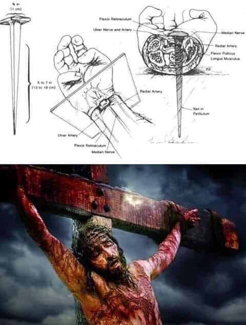 La mort divine, atroce et scientifique de Jésus pour notre Salut ✟ Comme Il a souffert ! 16557411