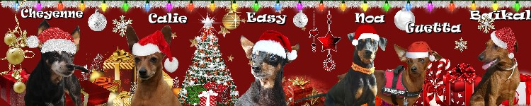 cohabitation pinscher/chat persan IMPOSSIBLE ? - Page 2 Patcho31
