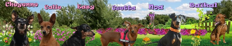 Gerry x pinscher de 1 an et 1 mois - Page 2 Patcho36