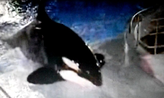 [Dossier] Passages orques dans les films et dessins animés Arlett10