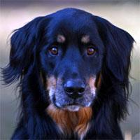 les chiens d 39 aide aux handicap s. Black Bedroom Furniture Sets. Home Design Ideas