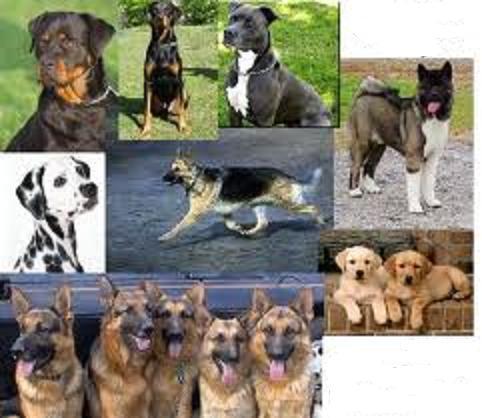 رابطة محبى الكلاب فى مصر