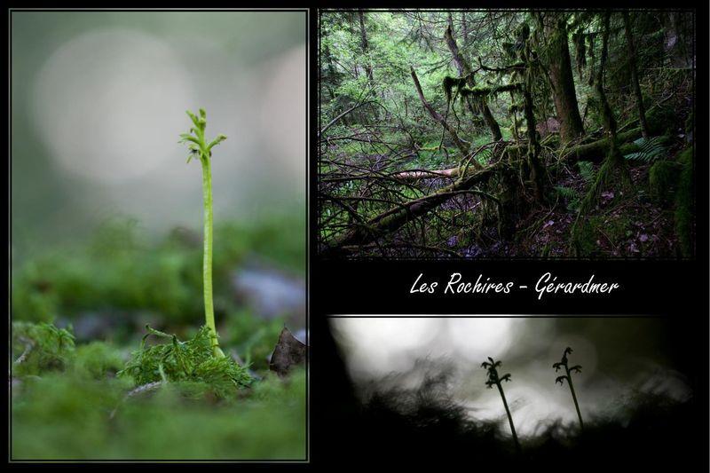 Mes racines gérômoises - Gérardmer (88) Rochir10