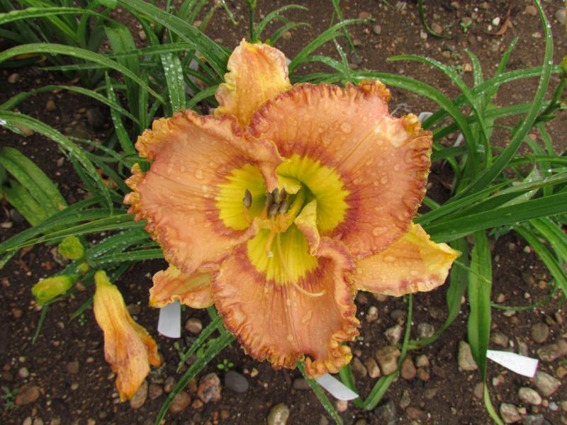 Fernande: Promenade sous la pluie 11316-10