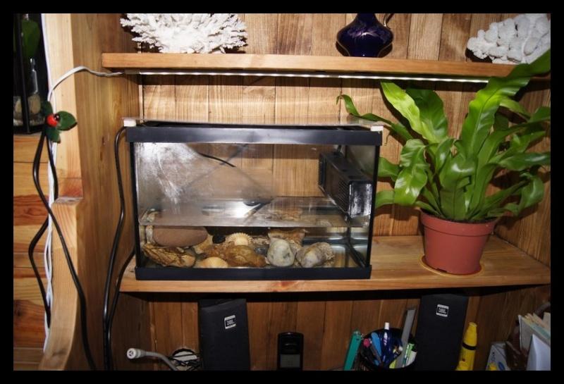 Ganapati et pourriture des nageoires ou Oodinium...[Au paradis des poissons depuis le 26.11.11] 25_11_10