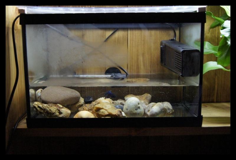 Ganapati et pourriture des nageoires ou Oodinium...[Au paradis des poissons depuis le 26.11.11] 25_11_12