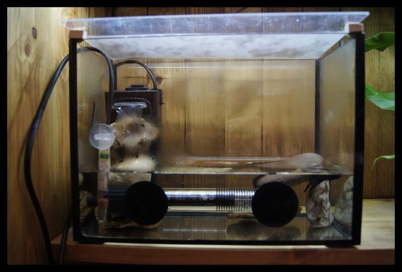 Ganapati et pourriture des nageoires ou Oodinium...[Au paradis des poissons depuis le 26.11.11] Gana2610