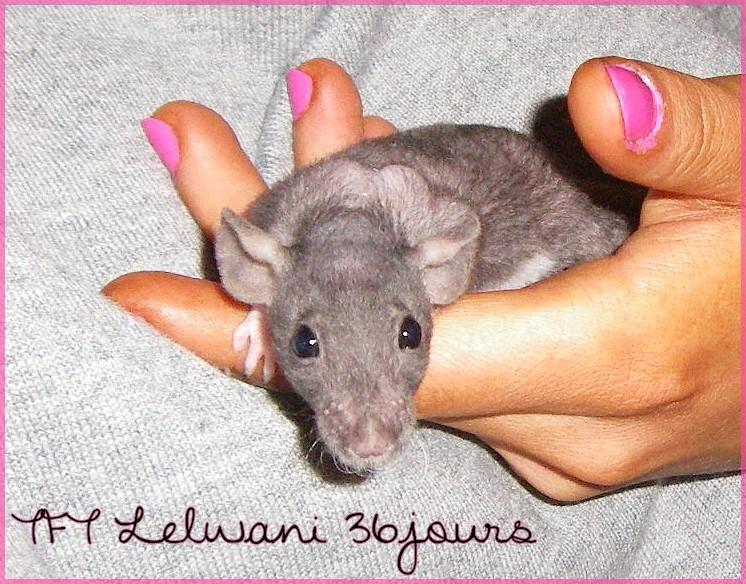 Les petites surprises de Giuliana - Page 15 Lelwan23