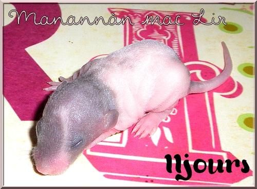 Les petites surprises de Giuliana - Page 6 Manann15