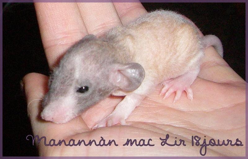 Les petites surprises de Giuliana - Page 9 Manann18