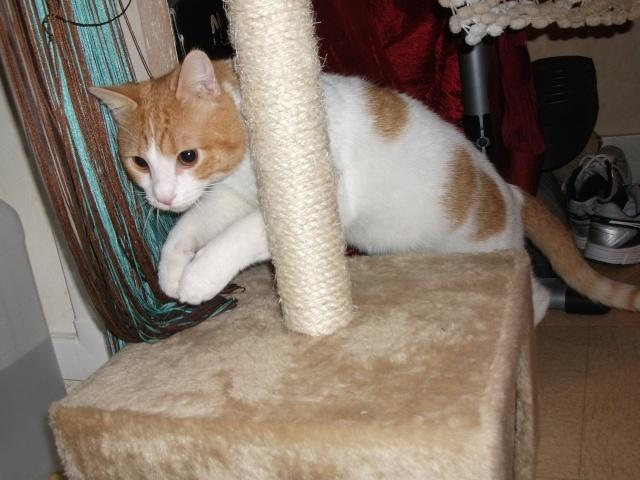 TIPOTE mâle blanc et roux de 2 mois et demi  - Page 2 Photo_20