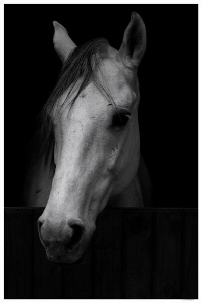 .:.Sonika.:. Horse10