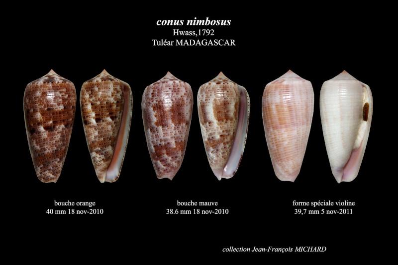 Conus (Phasmoconus) nimbosus   Hwass in Bruguière, 1792  3_conu11