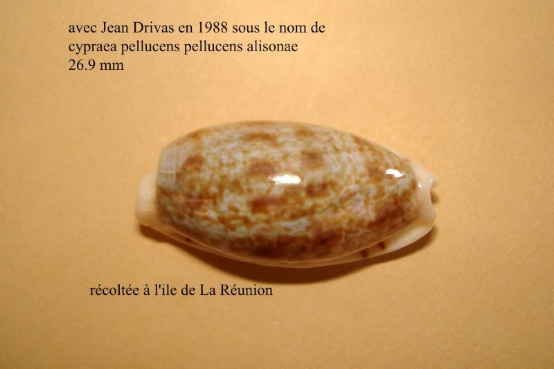 Talostolida alisonae  Burgess, 1983 voir Talostolida pellucens pellucens - (Melvill, 1888) Sp_la_10