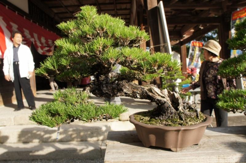 voyage au Japon 2011: parc Ritsurin  Dsc00416