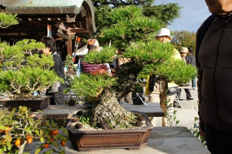 voyage au Japon 2011: parc Ritsurin  Dsc00417