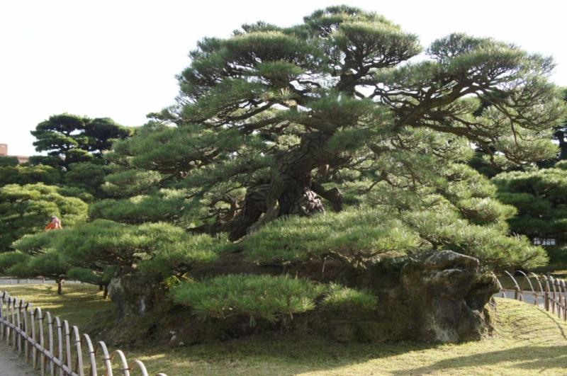 voyage au Japon 2011: parc Ritsurin  Dsc00421