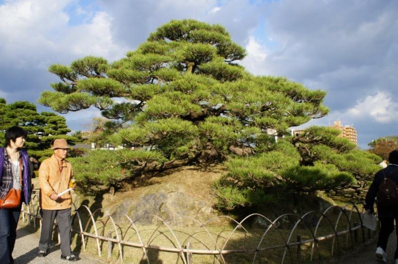 voyage au Japon 2011: parc Ritsurin  Dsc00422