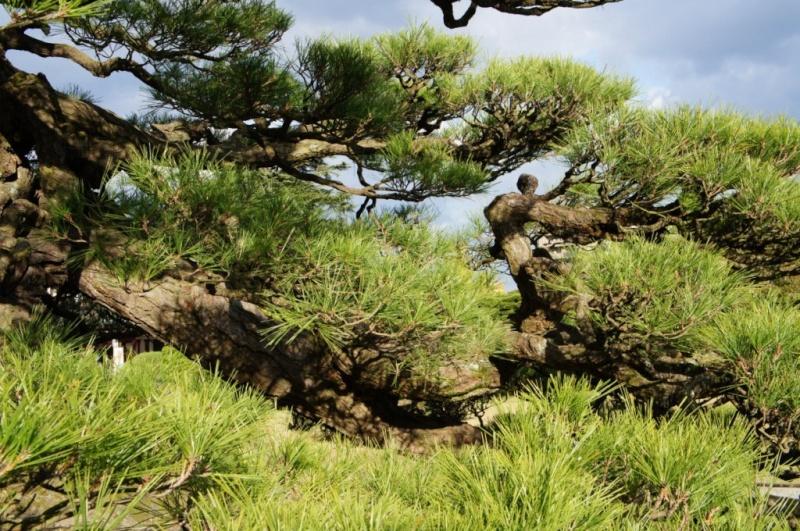 voyage au Japon 2011: parc Ritsurin  Dsc00423