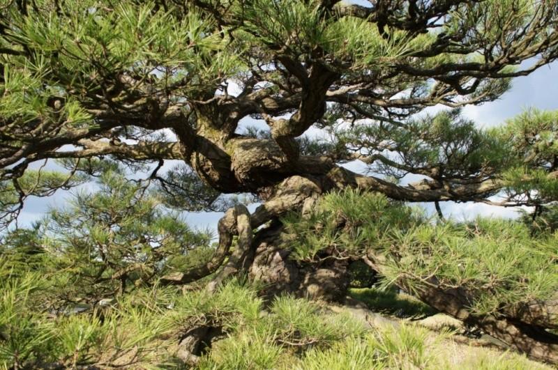 voyage au Japon 2011: parc Ritsurin  Dsc00424