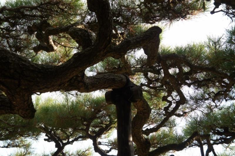 voyage au Japon 2011: parc Ritsurin  Dsc00432