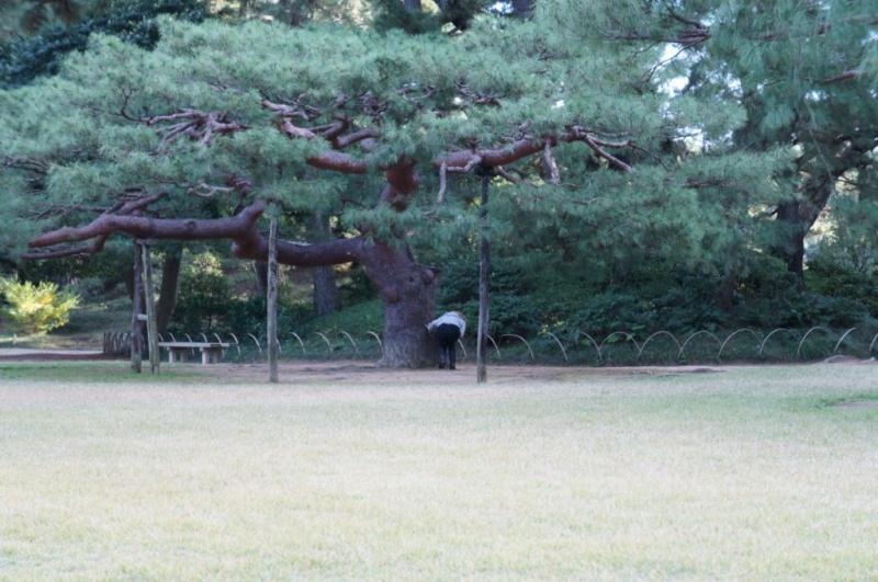 voyage au Japon 2011: parc Ritsurin  Dsc00435