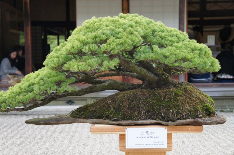 voyage au Japon 2011: parc Ritsurin  Dsc00440