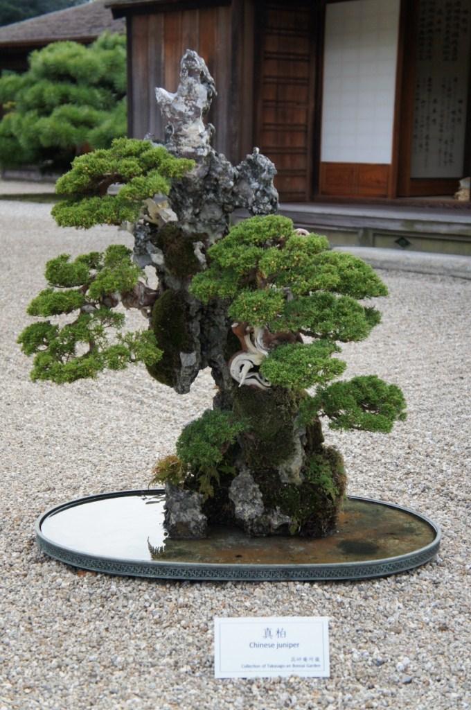voyage au Japon 2011: parc Ritsurin  Dsc00441