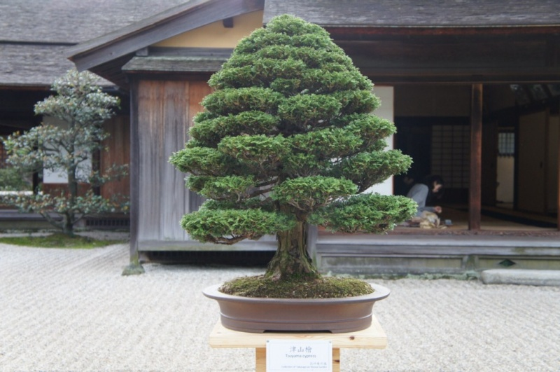 voyage au Japon 2011: parc Ritsurin  Dsc00442