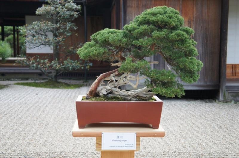 voyage au Japon 2011: parc Ritsurin  Dsc00443