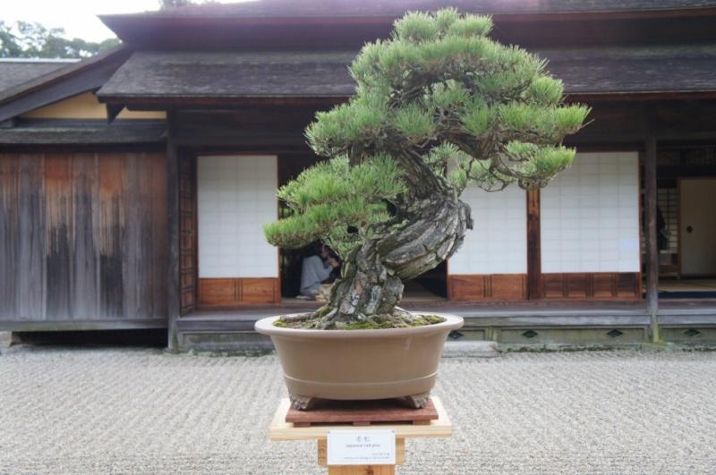 voyage au Japon 2011: parc Ritsurin  Dsc00444