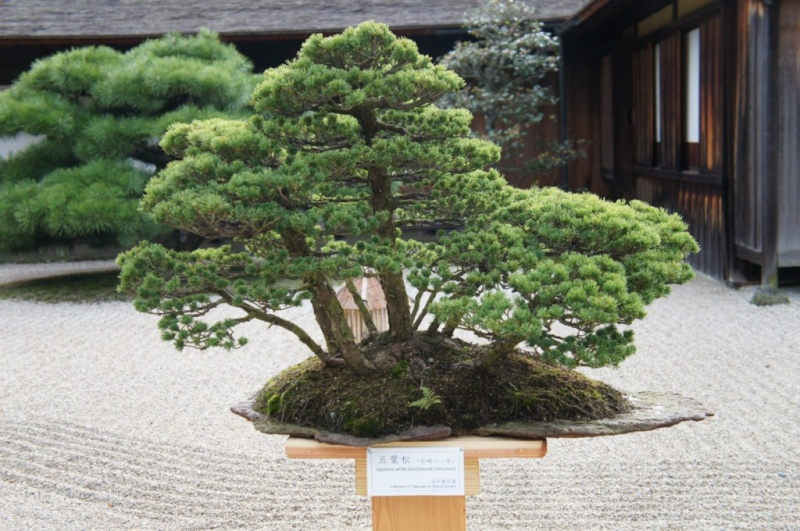 voyage au Japon 2011: parc Ritsurin  Dsc00445