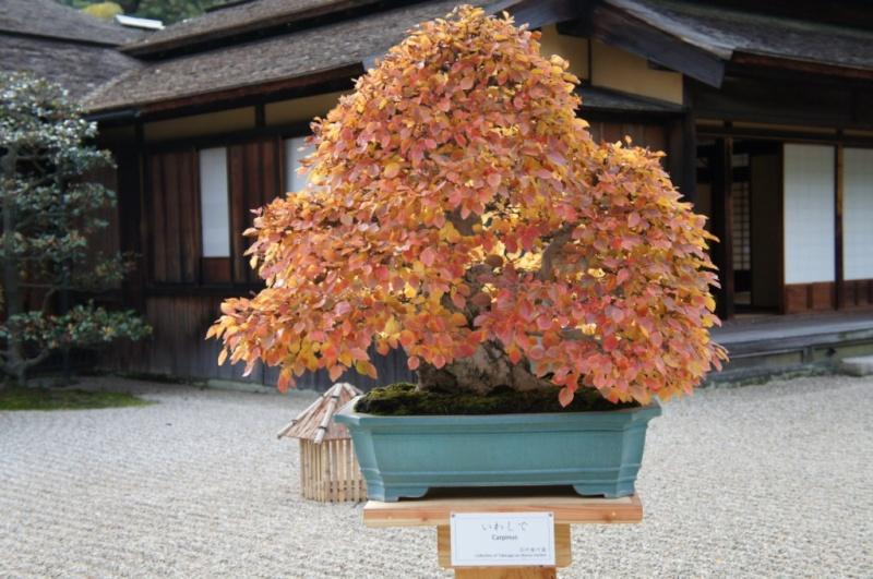 voyage au Japon 2011: parc Ritsurin  Dsc00446