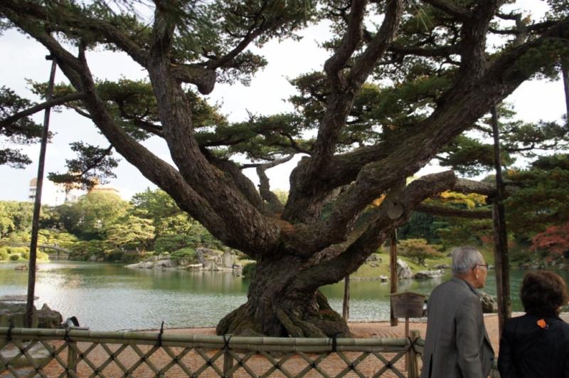 voyage au Japon 2011: parc Ritsurin  Dsc00450