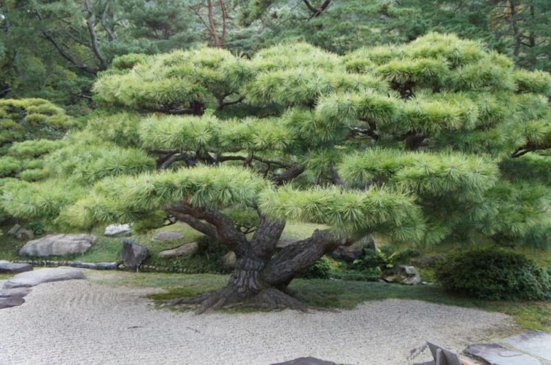 voyage au Japon 2011: parc Ritsurin  Dsc00454