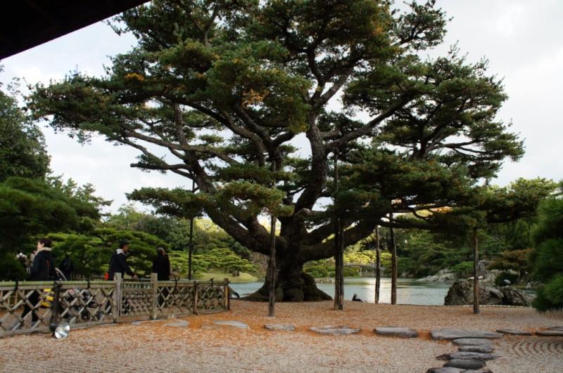 voyage au Japon 2011: parc Ritsurin  Dsc00458