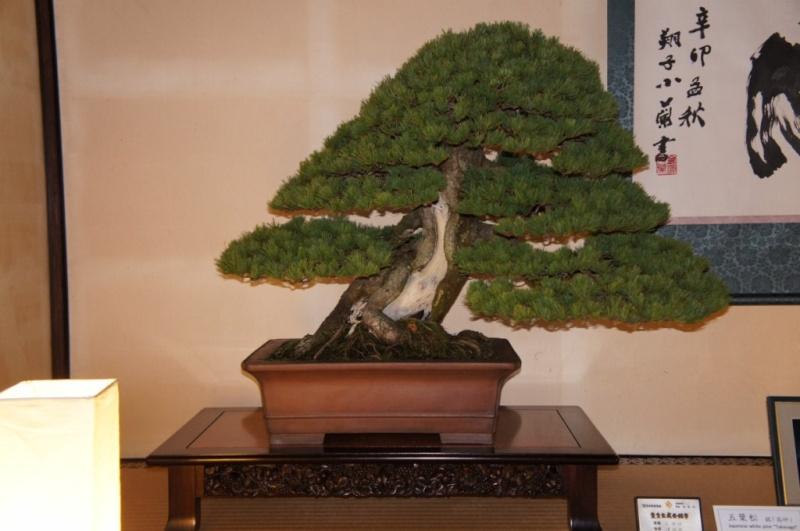 voyage au Japon 2011: parc Ritsurin  Dsc00460