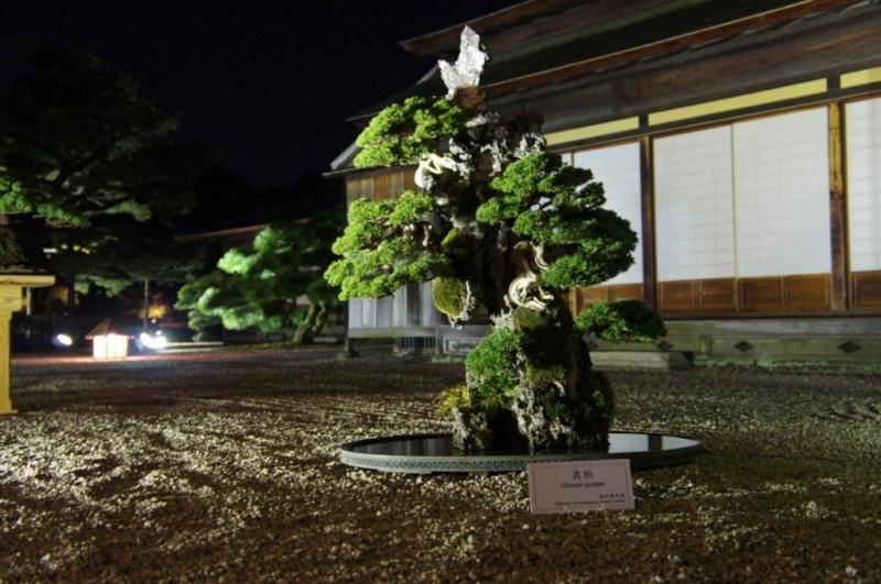 voyage au Japon 2011: parc Ritsurin  Dsc00511