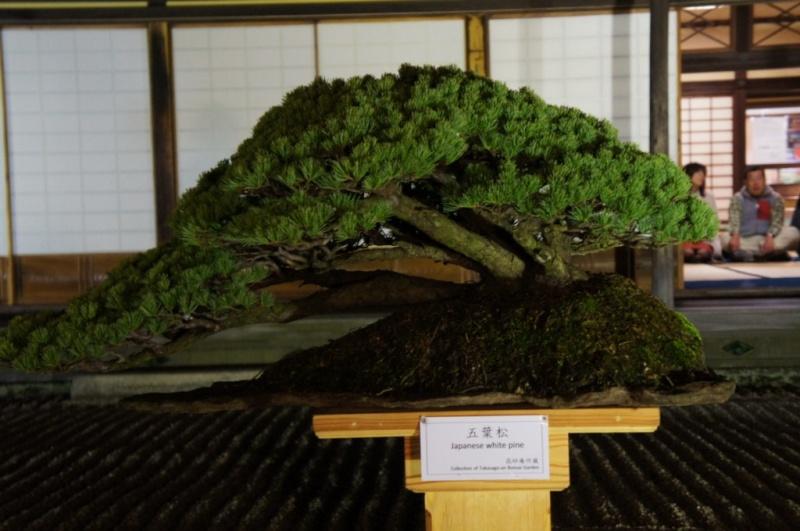 voyage au Japon 2011: parc Ritsurin  Dsc00512
