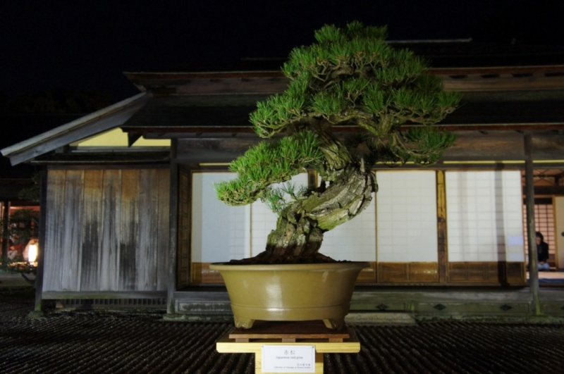 voyage au Japon 2011: parc Ritsurin  Dsc00513