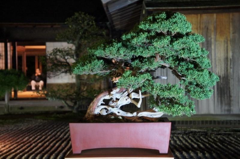 voyage au Japon 2011: parc Ritsurin  Dsc00514