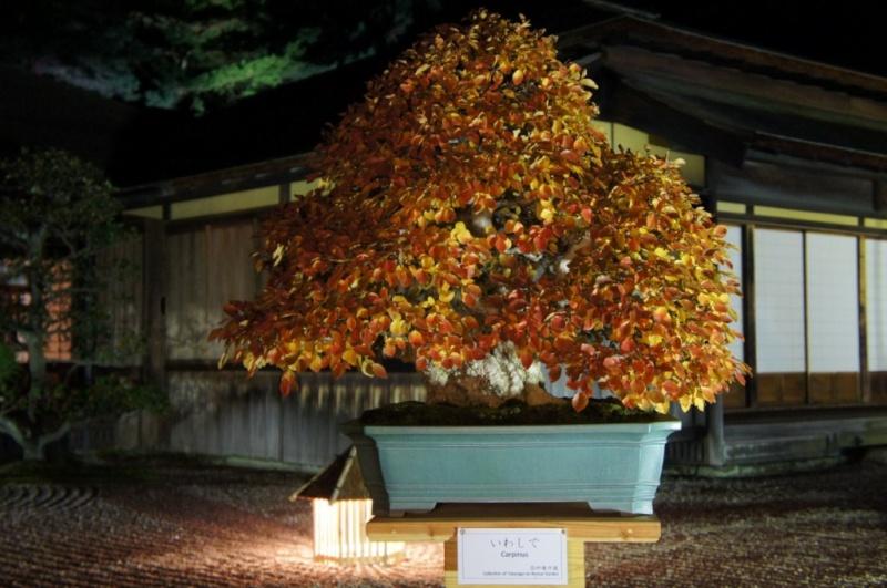voyage au Japon 2011: parc Ritsurin  Dsc00515