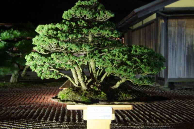 voyage au Japon 2011: parc Ritsurin  Dsc00516